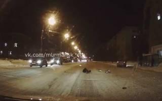 Собаку сбили на улицах Мурманска