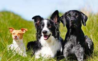 4 предрассудка о собаках, про которые нужно забыть навсегда