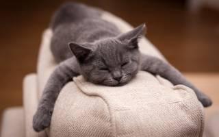 Какие диваны опасны для котов