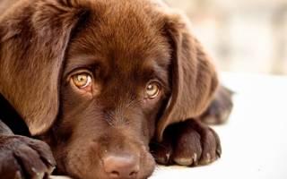 Типичные осложнения после прививки щенков