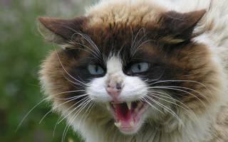 Как отучить кота кусаться, царапаться и кидаться, в том числе во время игры