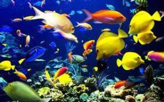 Совместимость видов аквариумных рыбок в одном аквариуме (таблица)