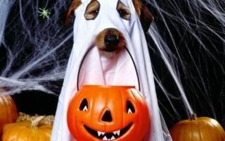 Костюм для собаки на хэллоуин — фото-идеи