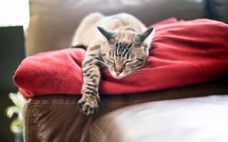 10 удивительных фактов о кошках