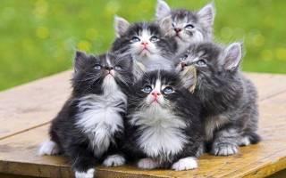 Какие кошки не болеют
