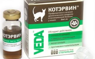 Капли КотЭрвин для котов: состав и форма выпуска, целебные свойства и инструкция по применению, отзывы