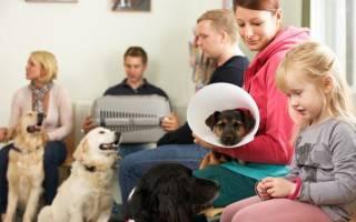 Как понять, что у собаки панкреатит