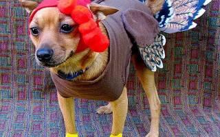 Самые странная одежда для собак — фото