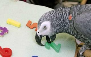 5 видов умных попугаев, которых можно держать дома