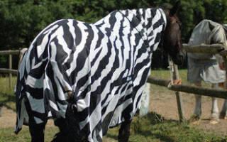 Загадки природы: учёные выяснили зачем зебрам полосы