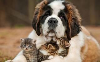 Самые добрые породы собак — названия и фото