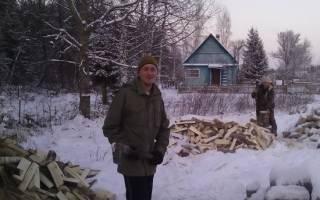 Дворовый пёс загрыз 19 кур и погиб от рук фермера