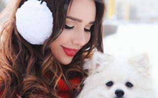 Какая порода у собаки Маши Вэй: подборка фото
