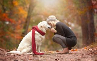 Осенняя фотосессия с собакой — оригинальные идеи