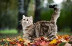 Признаки счастливого кота — фото, иллюстрирующие любовь к жизни