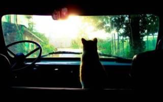 Как подготовить кошку к поездке — Zoolog.guru