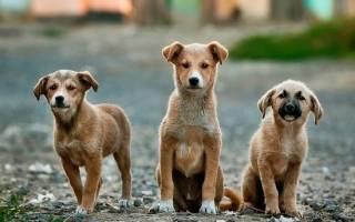 Группа подростков спасла щенят