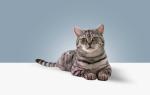 Кошки с окрасом как из рекламы «Вискас»