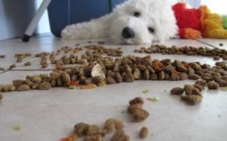 Собаке не подходит питание — как понять и что делать