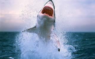 Топ 20 самых опасных животных мира с фото