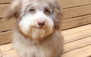 Пёс с выразительной мордой стал звездой социальных сетей