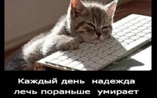 Мемы с кошками — подборка лучших