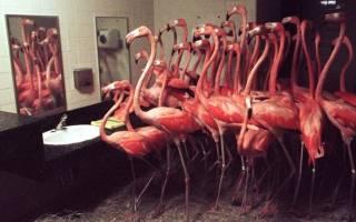 Реакция животных на зеркало — удивительные фото