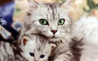 Самые забавные кошки — подборка фото