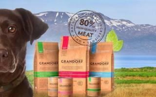 Особенности корма для собак Грандорф: описание, достоинства и отзывы ветеринаров