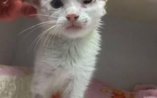 Женщина спасла и вылечила котёнка с лейкемией