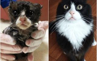 Фото 10 кошек до и после того, как их подобрали с улицы