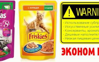 Рейтинг кормов для кошек 2018 — сухие и консервированные, холистики и эконом