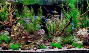 Самоделки для аквариума своими руками: идеи на фото