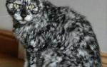 Витилиго — необычная красота животного мира