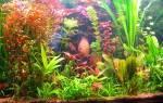 Какие бывают аквариумные растения: фото и название самых неприхотливых видов водорослей с описанием
