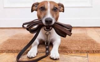 Как отучить собаку играть с обувью