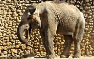 Самая грустная в мире слониха умерла в Испании