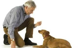 Как общаться с собакой