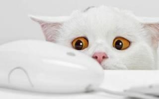 Причины завести дома кошку
