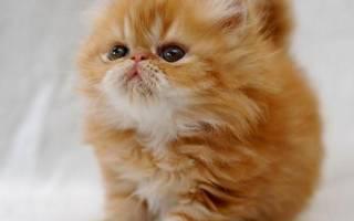 Зачем кошки топчутся лапками
