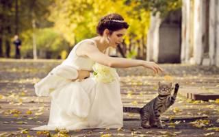 Осенняя фотосессия с кошкой — лучшие идеи