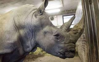 Ребёнок упал в вольер к носорогам в зоопарке США