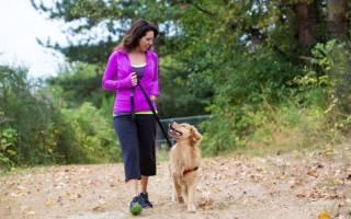 Почему воет собака: 6 разных причин