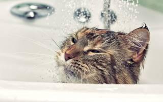 Как правильно мыть кошку в домашних условиях, советы по купанию питомца, даже если он боится воды
