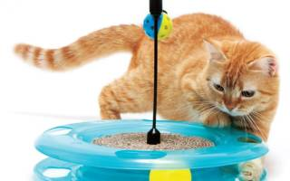 Игрушки для кошек своими руками — лучшие идеи