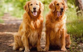 Породы собак, которые на враждуют с кошками