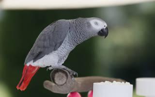 Сколько существует в мире пород попугаев, разные виды с названиями