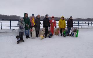 Благотворительный собачий конкурс прошёл в Омске