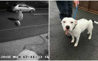 Брошенная на дороге собака стала знаменитостью
