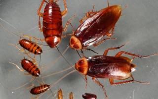 Борная кислота от тараканов в квартире: рецепты с яйцом, отзывы, принцип действия, безопасность
